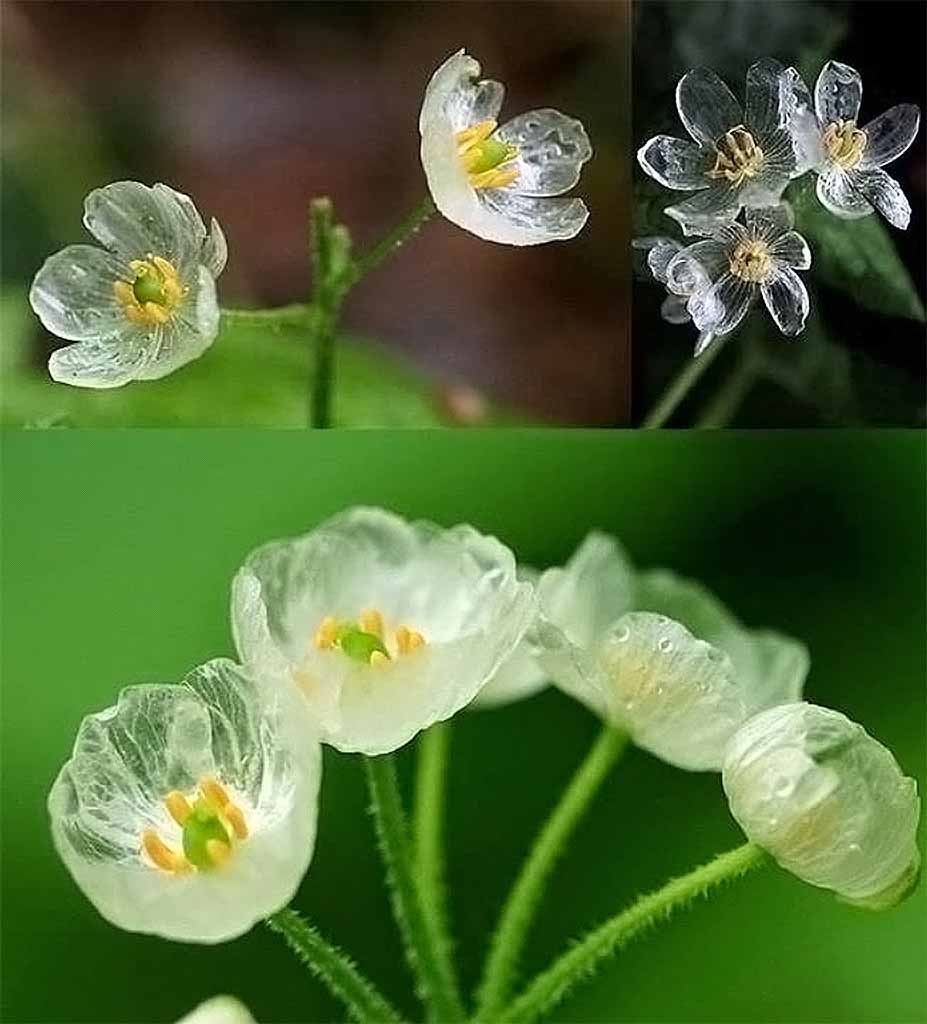 https://rezanazmi.files.wordpress.com/2014/09/flower1.jpg