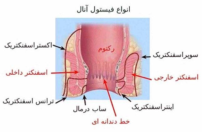 rectum.jpg