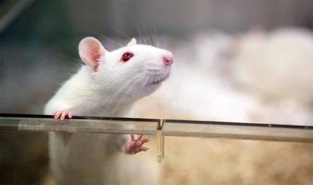 موش 1.jpg
