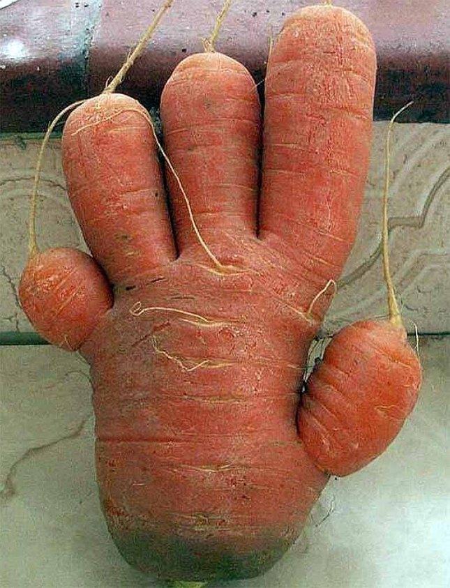 هویج.jpg