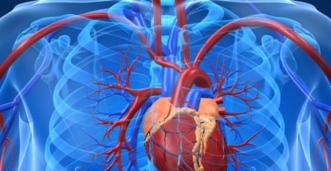 قلب و عروق.jpg