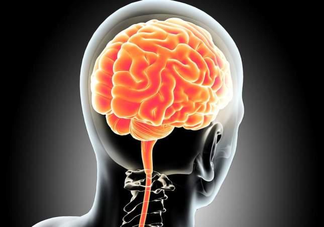 مغز انسان.jpg