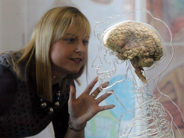 مغز در مجسمه شفاف.jpg