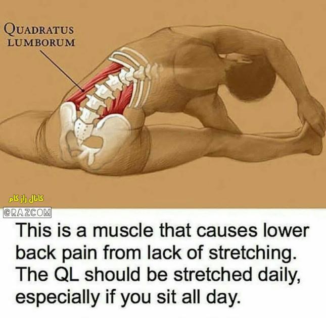تمرین کششی برای درد کمر.jpg