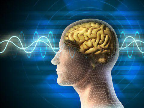 امواج مغز.jpg